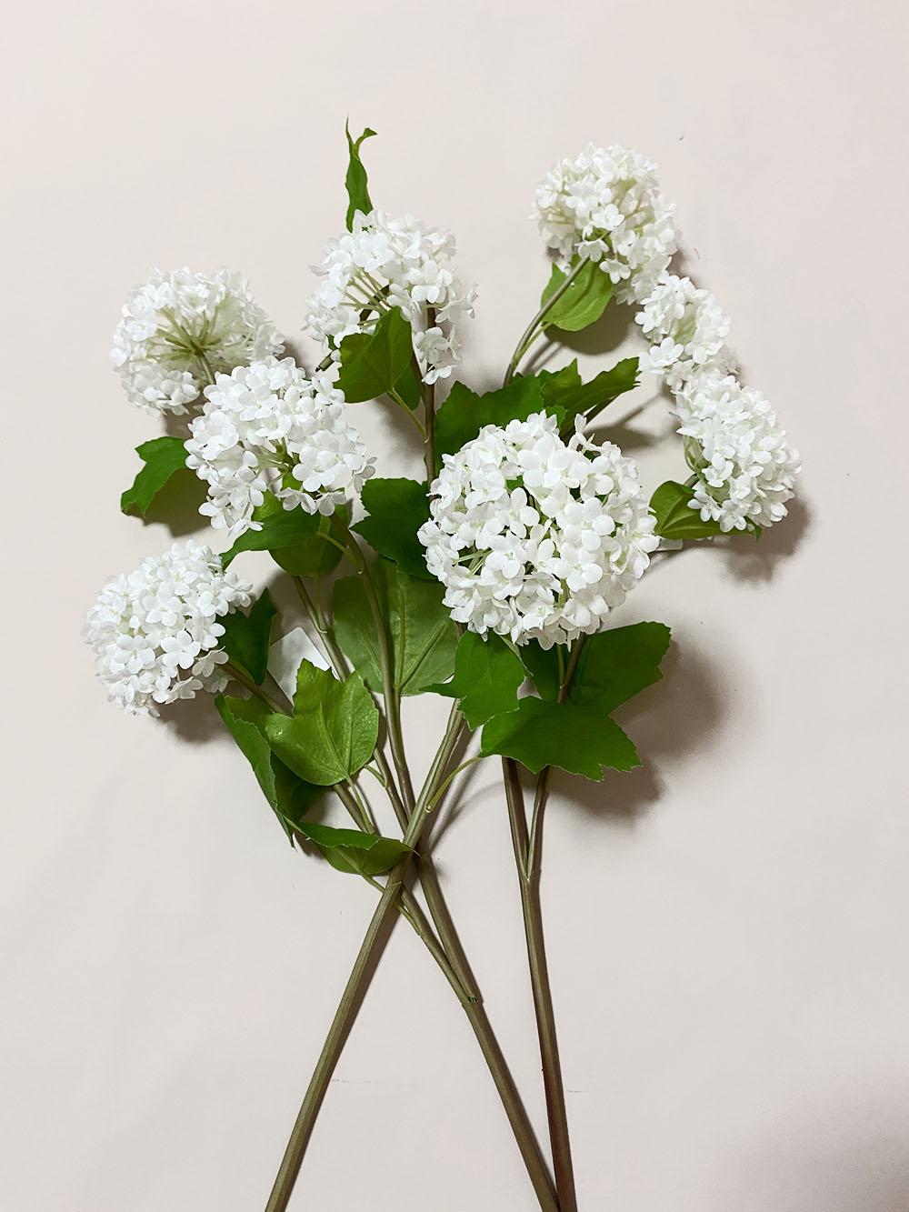 fiori di viburno