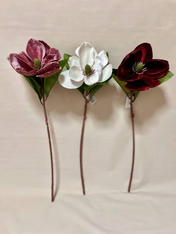 magnolia velluto