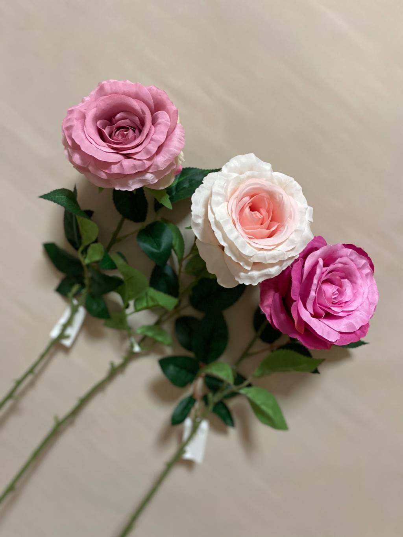 rosa laura