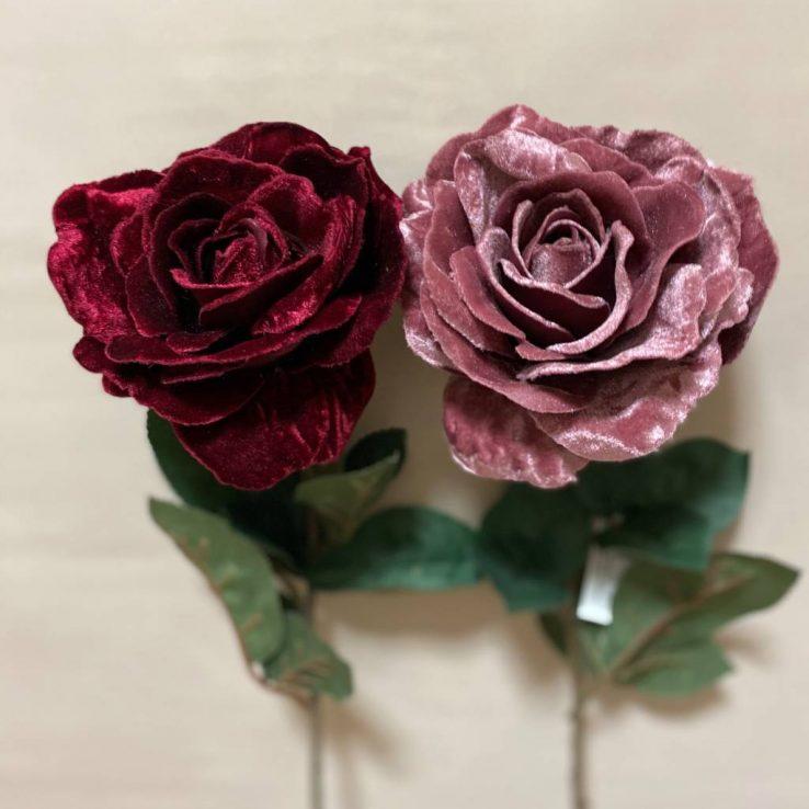 rosa velluto premium