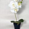 Pianta orchidea